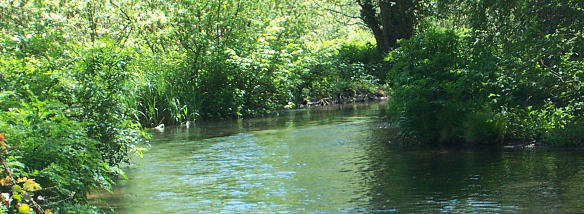 The river Wey in Hampshire, UK
